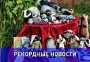 Крупнейшую в мире коллекцию барсуков планирует собрать жительница Одинцово