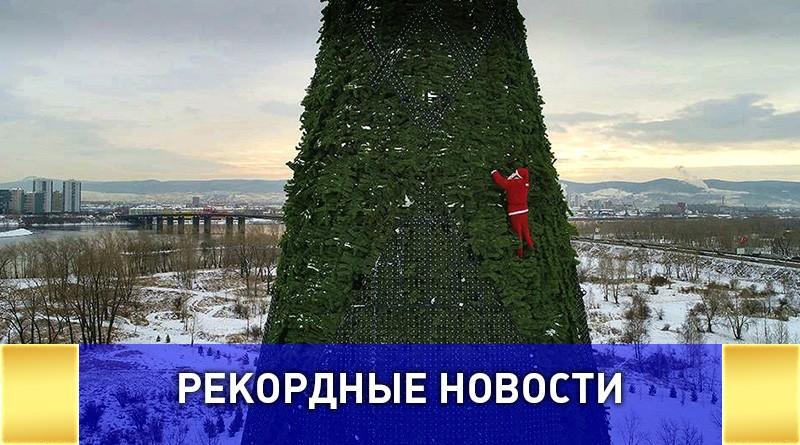 Самую высокую ёлку страны представили в Красноярске